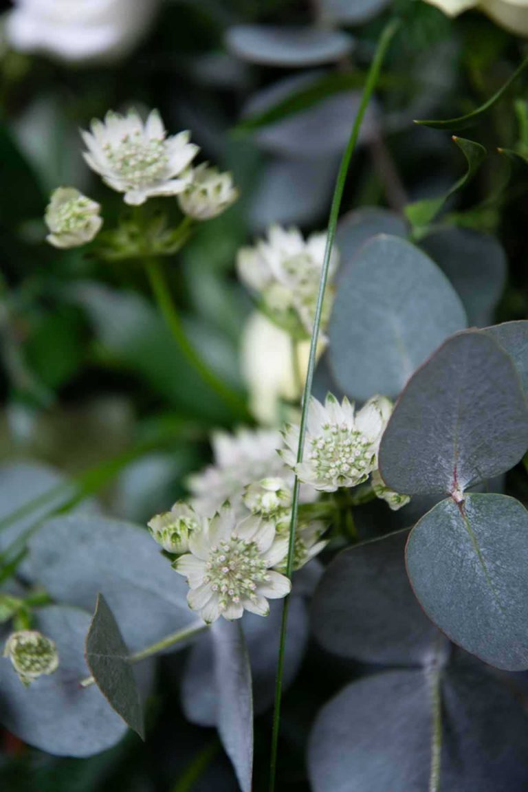 white and green foliage