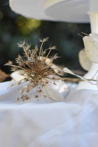 dried cow parsley on a white cloth