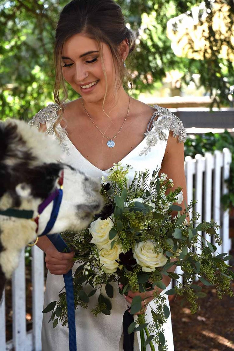 bride with white rose bouquet and brown and white alpaca
