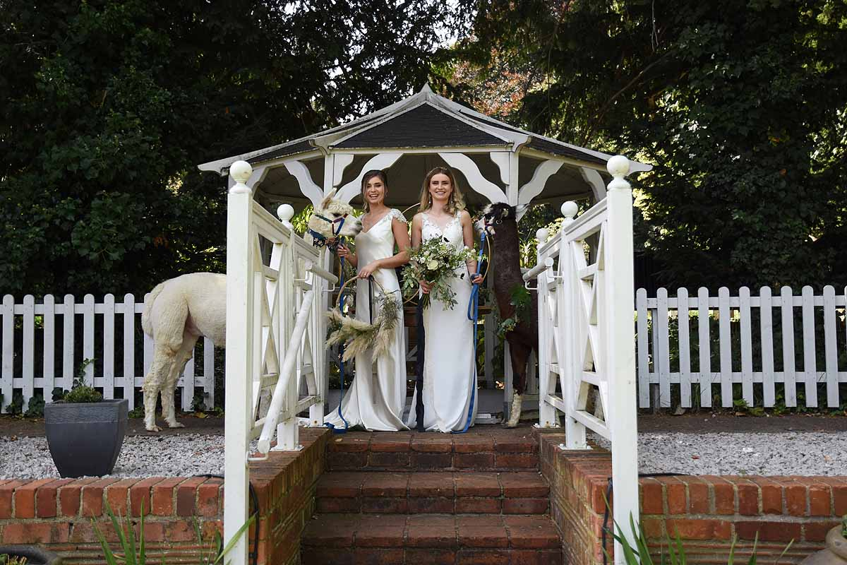 two brides under a pergola with two alpacas
